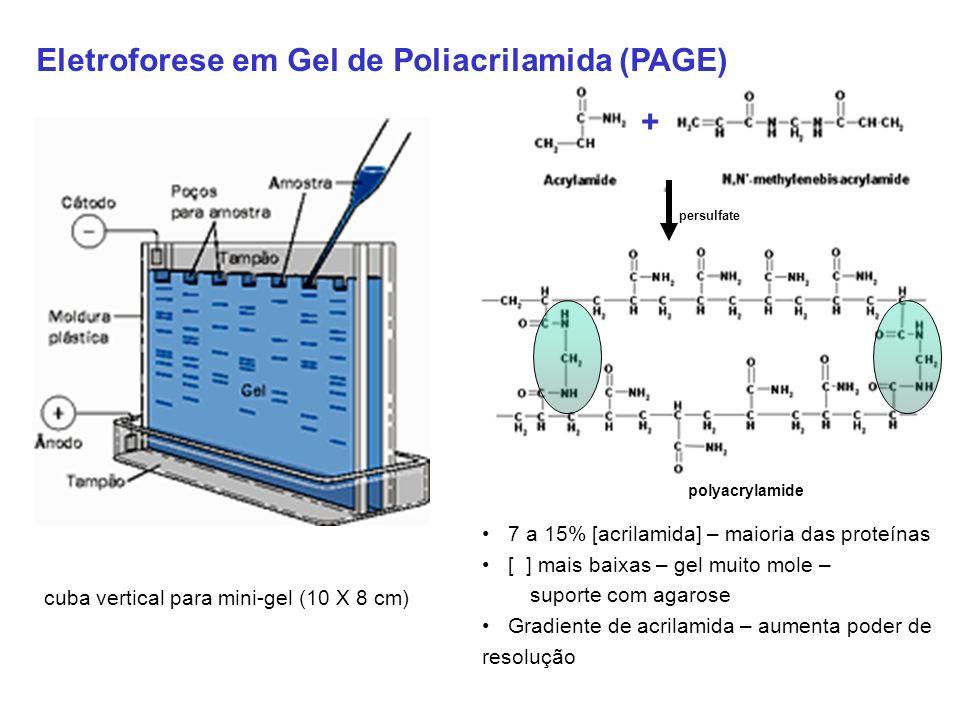 Eletroforese em Gel de Poliacrilamida (PAGE) polyacrylamide persulfate + 7 a 15% [acrilamida] – maioria das proteínas [ ] mais baixas – gel muito mole