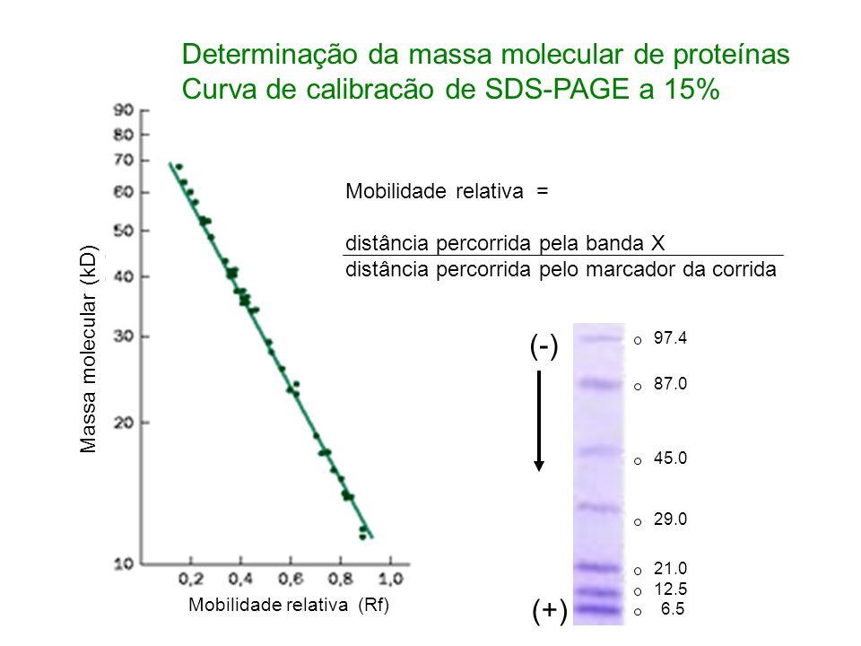 Determinação da massa molecular de proteínas Curva de calibração de SDS-PAGE a 15% Mobilidade relativa (Rf) Massa molecular (kD) Mobilidade relativa =