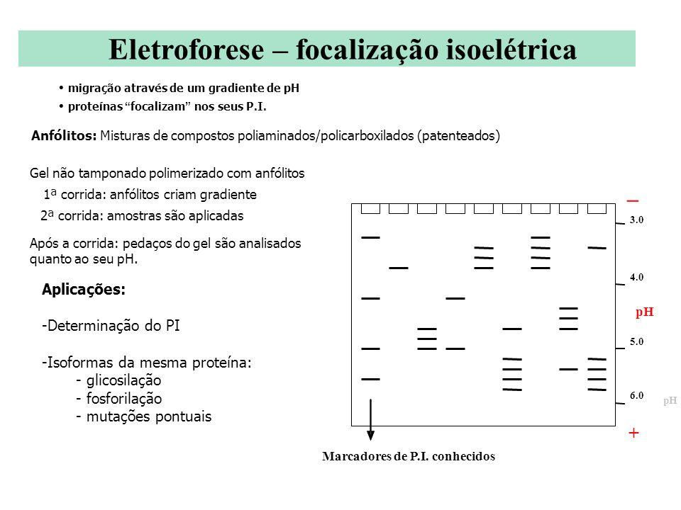 migração através de um gradiente de pH proteínas focalizam nos seus P.I. Anfólitos: Misturas de compostos poliaminados/policarboxilados (patenteados)