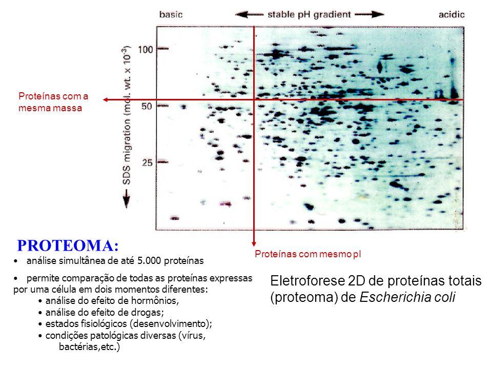 PROTEOMA: análise simultânea de até 5.000 proteínas permite comparação de todas as proteínas expressas por uma célula em dois momentos diferentes: aná