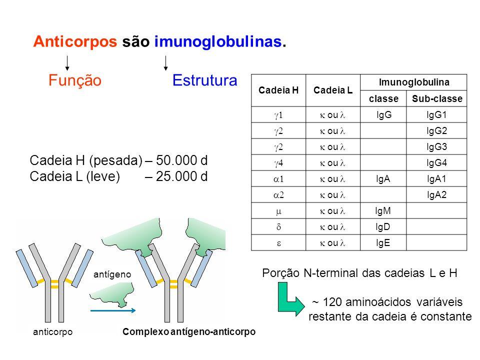 Anticorpos são imunoglobulinas. Cadeia H (pesada) – 50.000 d Cadeia L (leve) – 25.000 d Porção N-terminal das cadeias L e H ~ 120 aminoácidos variávei
