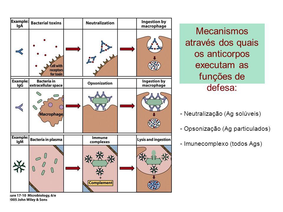 Mecanismos através dos quais os anticorpos executam as funções de defesa: - Neutralização (Ag solúveis) - Opsonização (Ag particulados) - Imunecomplex