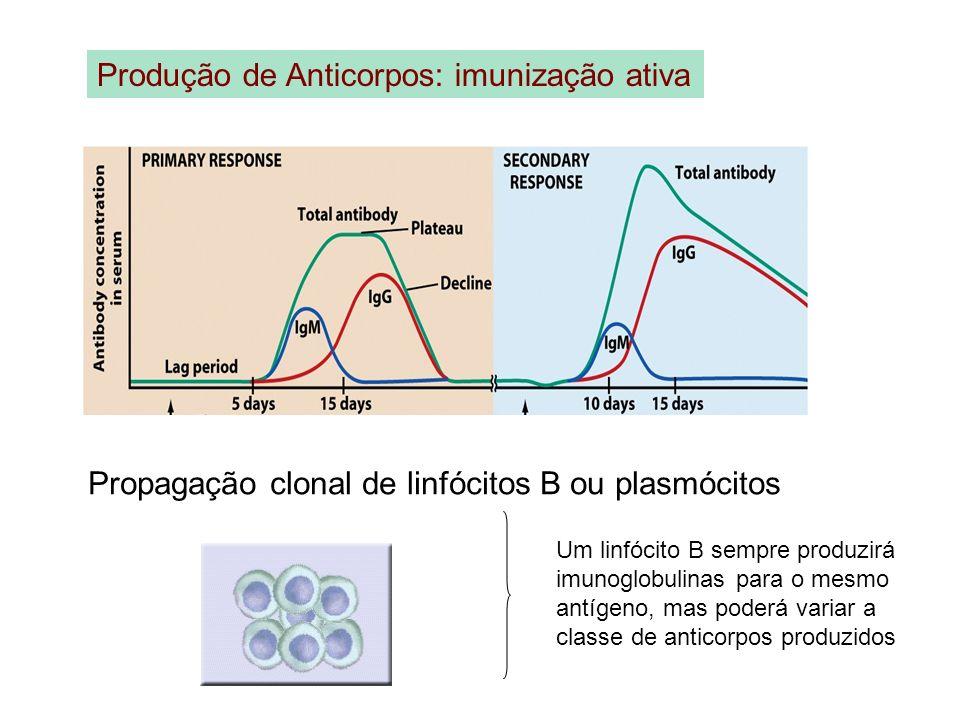 Produção de Anticorpos: imunização ativa Propagação clonal de linfócitos B ou plasmócitos Um linfócito B sempre produzirá imunoglobulinas para o mesmo
