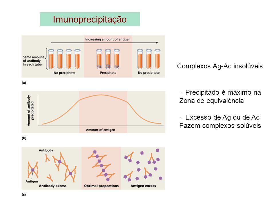 Imunoprecipitação Complexos Ag-Ac insolúveis - Precipitado é máximo na Zona de equivalência - Excesso de Ag ou de Ac Fazem complexos solúveis