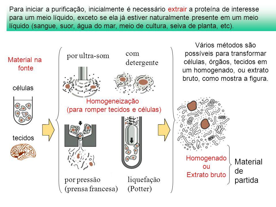 Para iniciar a purificação, inicialmente é necessário extrair a proteína de interesse para um meio líquido, exceto se ela já estiver naturalmente pres