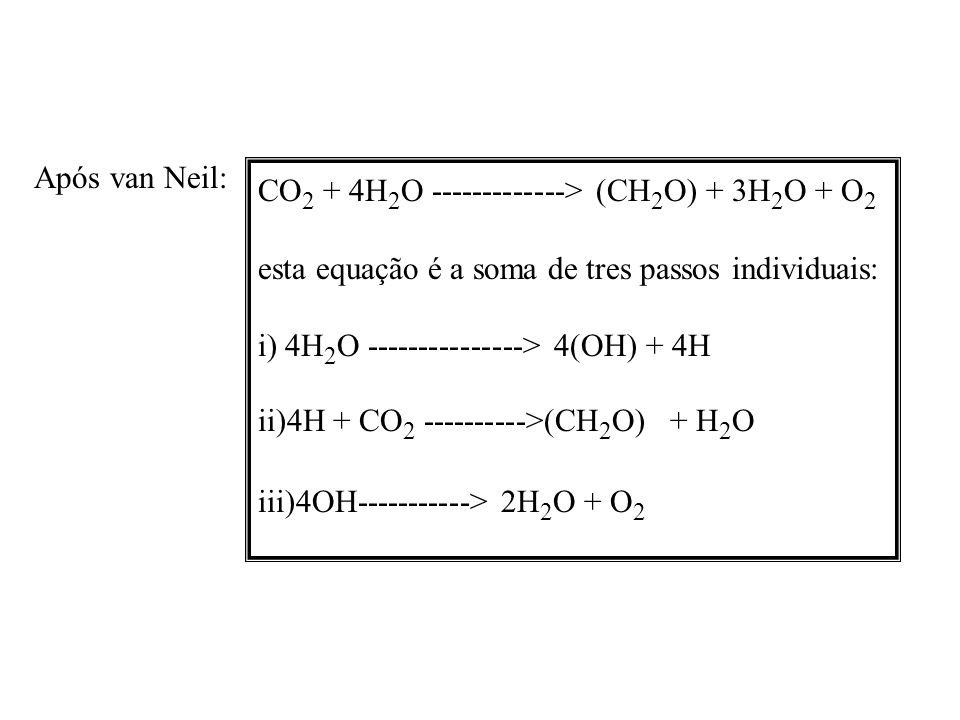 1937, Robert Hill: liberação de O2 separada da redução do CO2 1941 Ruben and Kamen: H 2 O 18 18 O 2 e não C 18 O 2 Os anos 50 (especialmente 51 a 54): [ descobertas das rotas de formação do ATP e NADPH2 por Arnons e outros [Bassham, Benson e Calvin incorporação de 14 CO 2 em algas redução do CO 2 ocorria no escuro 2 NADPH 2 e 3 ATP