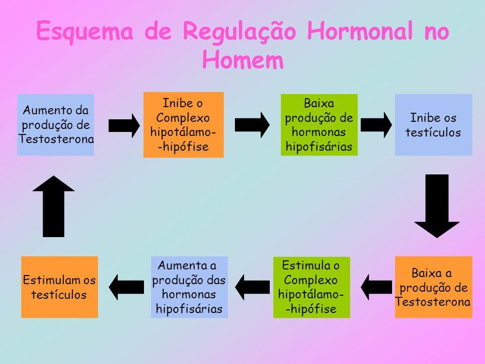 Esquema de Regulação Hormonal no Homem Aumento da produção de Testosterona Inibe o Complexo hipotálamo- -hipófise Estimulam os testículos Aumenta a pr