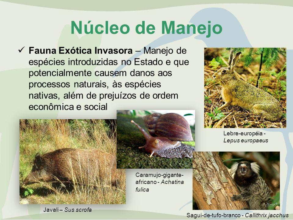 Núcleo de Manejo Fauna Exótica Invasora – Manejo de espécies introduzidas no Estado e que potencialmente causem danos aos processos naturais, às espéc