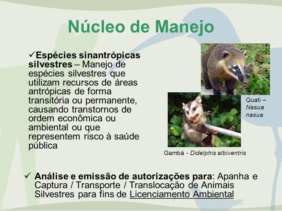 Núcleo de Manejo Análise e emissão de autorizações para: Apanha e Captura / Transporte / Translocação de Animais Silvestres para fins de Licenciamento