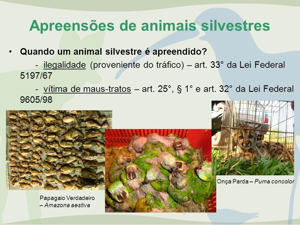 Apreensões de animais silvestres Quando um animal silvestre é apreendido? - ilegalidade (proveniente do tráfico) – art. 33° da Lei Federal 5197/67 - v