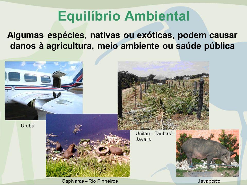 Equilíbrio Ambiental Algumas espécies, nativas ou exóticas, podem causar danos à agricultura, meio ambiente ou saúde pública Unitau – Taubaté - Javali