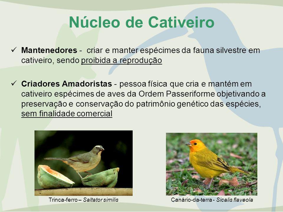 Núcleo de Cativeiro Mantenedores - criar e manter espécimes da fauna silvestre em cativeiro, sendo proibida a reprodução Criadores Amadoristas - pesso