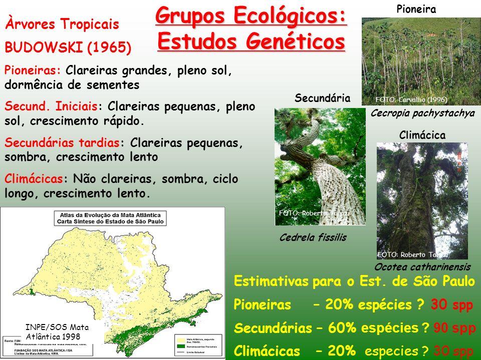 Grupos Ecológicos: Estudos Genéticos Àrvores Tropicais BUDOWSKI (1965) Pioneiras: Clareiras grandes, pleno sol, dormência de sementes Secund. Iniciais