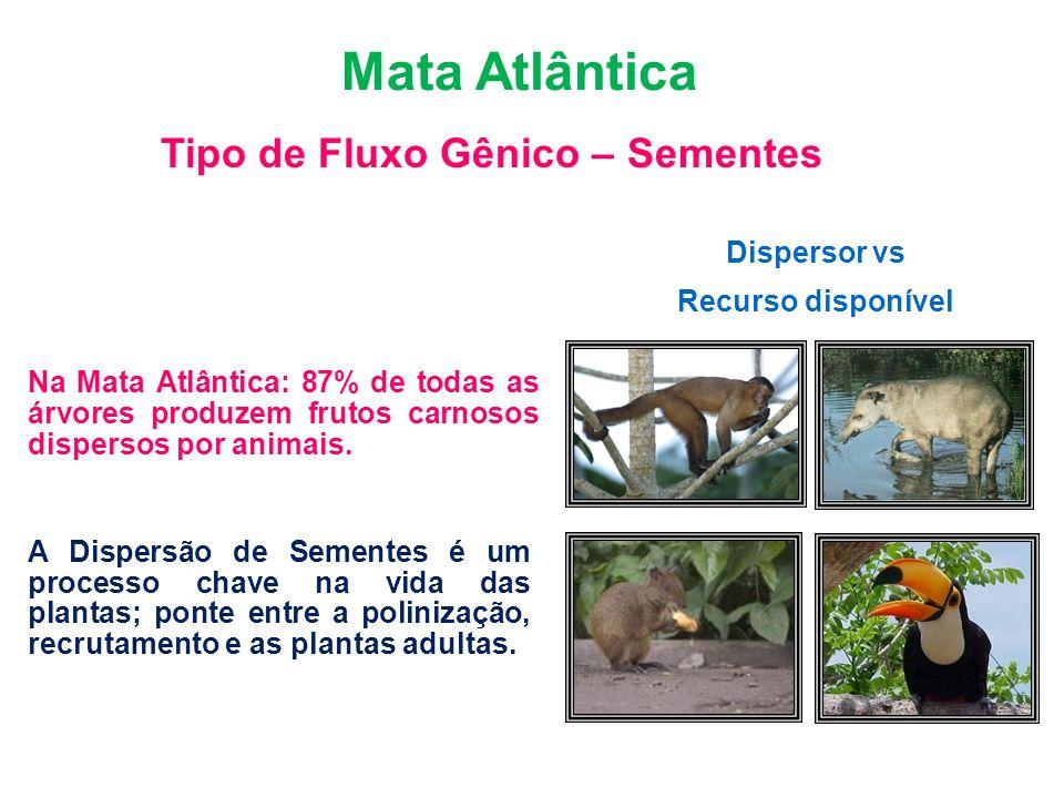 Dispersor vs Recurso disponível Bioma Mata Atlântica Tipo de Fluxo Gênico – Sementes Florestas Tropicais: 50-90% das árvores são dispersas por animais