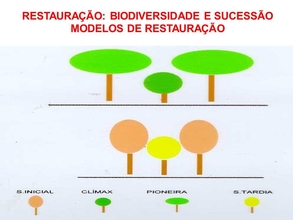 MODELO BÁSICO DE ASSOCIAÇÃO ENTRE GRUPOS ECOLÓGICOS (BUDOWSKI, 1966) RESTAURAÇÃO: BIODIVERSIDADE E SUCESSÃO MODELOS DE RESTAURAÇÃO
