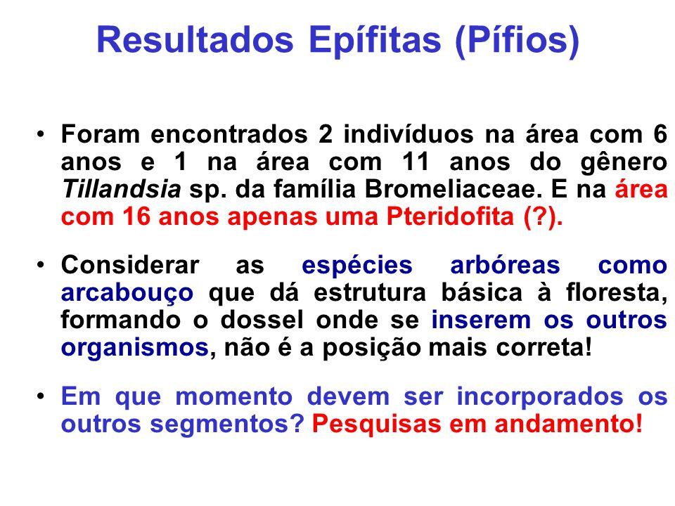Resultados Epífitas (Pífios) Foram encontrados 2 indivíduos na área com 6 anos e 1 na área com 11 anos do gênero Tillandsia sp. da família Bromeliacea