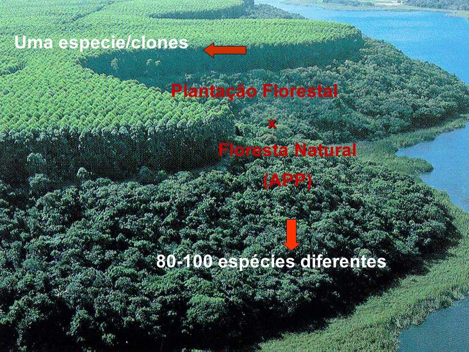 Plantação Florestal Floresta Natural (APP) Uma especie/clones 80-100 espécies diferentes x