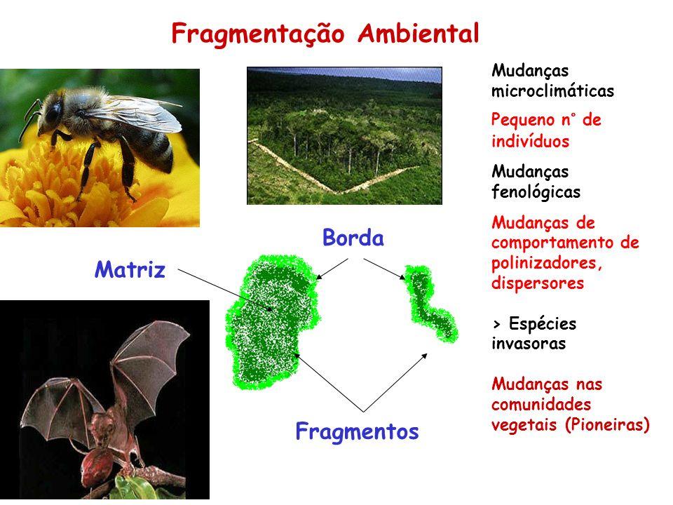 Fragmentação Ambiental Borda Fragmentos Mudanças microclimáticas Pequeno n° de indivíduos Mudanças fenológicas Mudanças de comportamento de polinizado