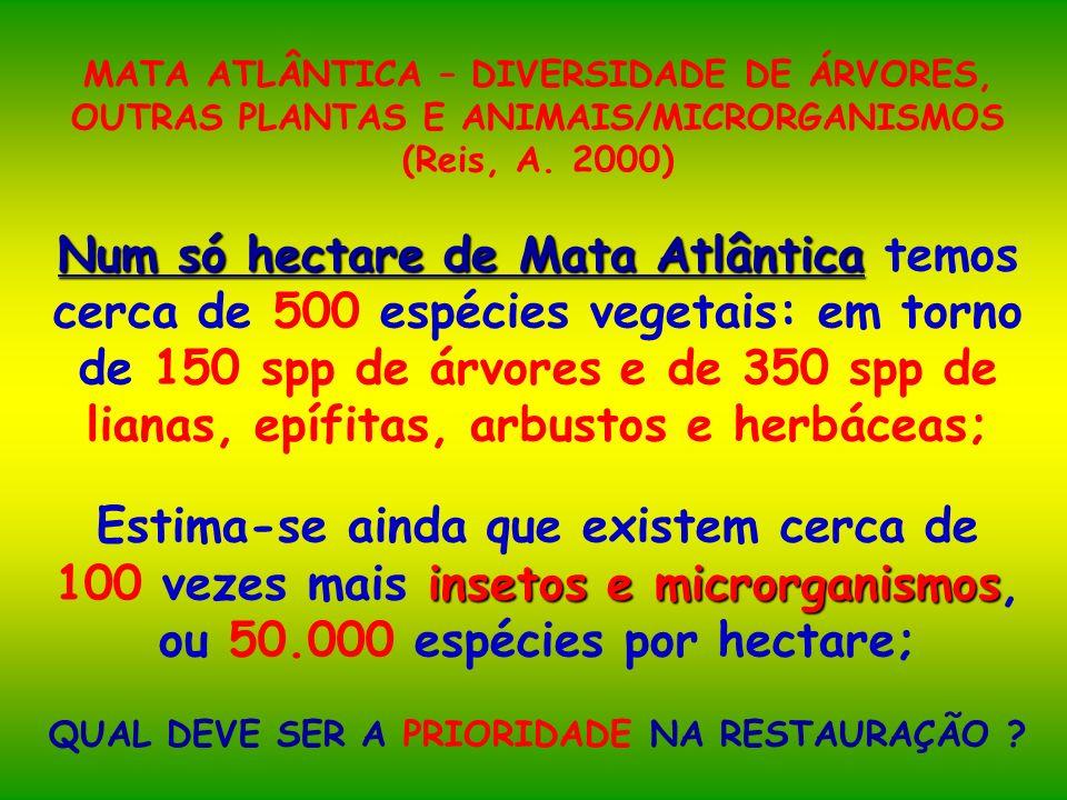 MATA ATLÂNTICA – DIVERSIDADE DE ÁRVORES, OUTRAS PLANTAS E ANIMAIS/MICRORGANISMOS (Reis, A. 2000) Num só hectare de Mata Atlântica Num só hectare de Ma