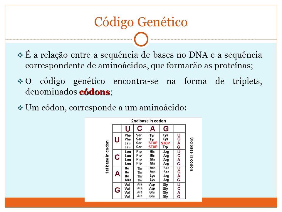É a relação entre a sequência de bases no DNA e a sequência correspondente de aminoácidos, que formarão as proteínas; códons O código genético encontr