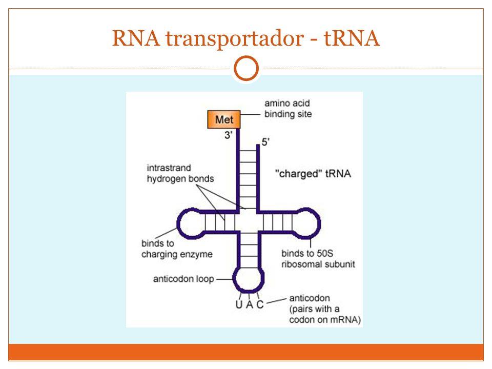 Degeneração do Código Genético isoaceptores tRNAs com diferentes anticódons podem ligar-se a um mesmo aminoácido (isoaceptores); código genético é degenerado Dessa forma, diferentes códons podem codificar um mesmo aminoácido – dizemos, portanto, que o código genético é degenerado.