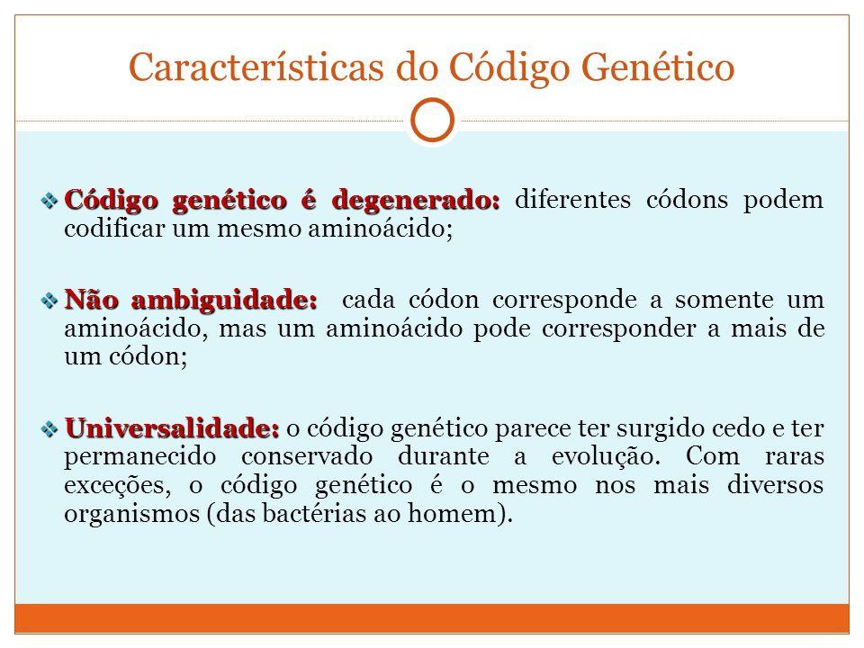 Códons de iniciação e de terminação O mRNA não é totalmente traduzido, uma vez que começa e termina em pontos específicos: Códon de iniciaçãoAUG Códon de iniciação: AUG (procariotos e eucariotos) METIONINA Dessa forma, o 1º aminoácido a ser incorporado é uma METIONINA; Códons de terminaçãoUAA, UGA, UAG Códons de terminação: UAA, UGA, UAG Códons que não são reconhecidos por nenhum tRNA.