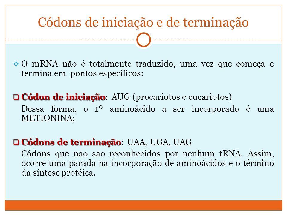 Códons de iniciação e de terminação O mRNA não é totalmente traduzido, uma vez que começa e termina em pontos específicos: Códon de iniciaçãoAUG Códon