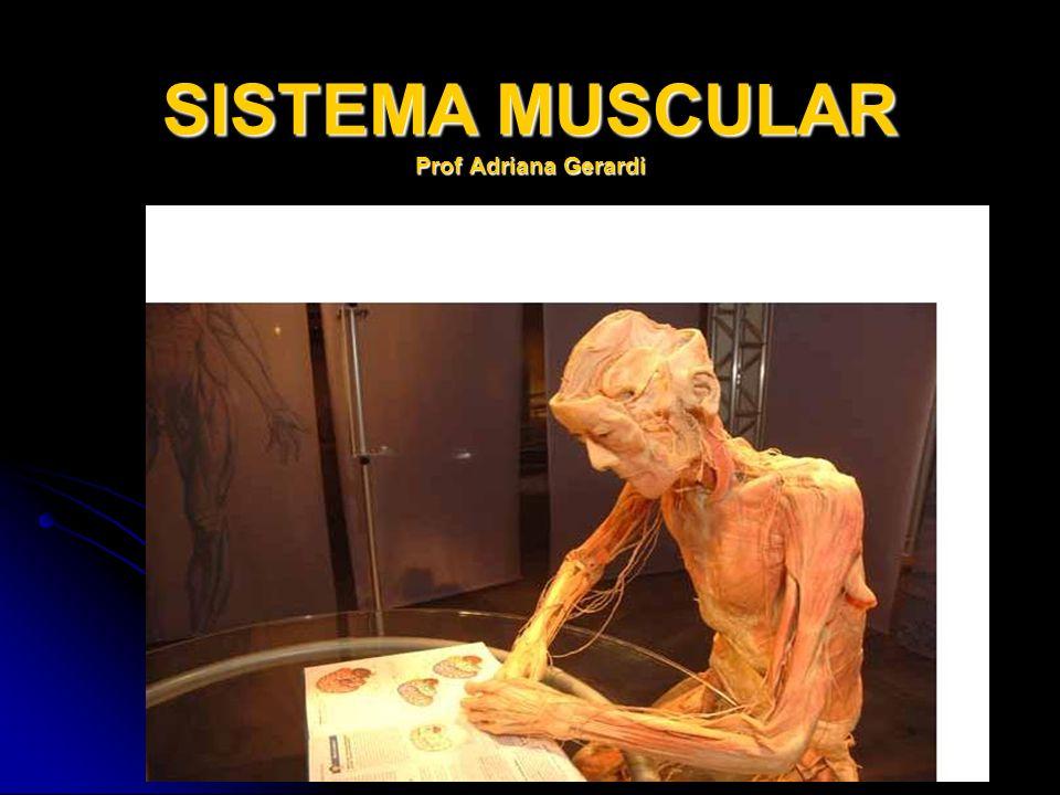 SISTEMA MUSCULAR Prof Adriana Gerardi