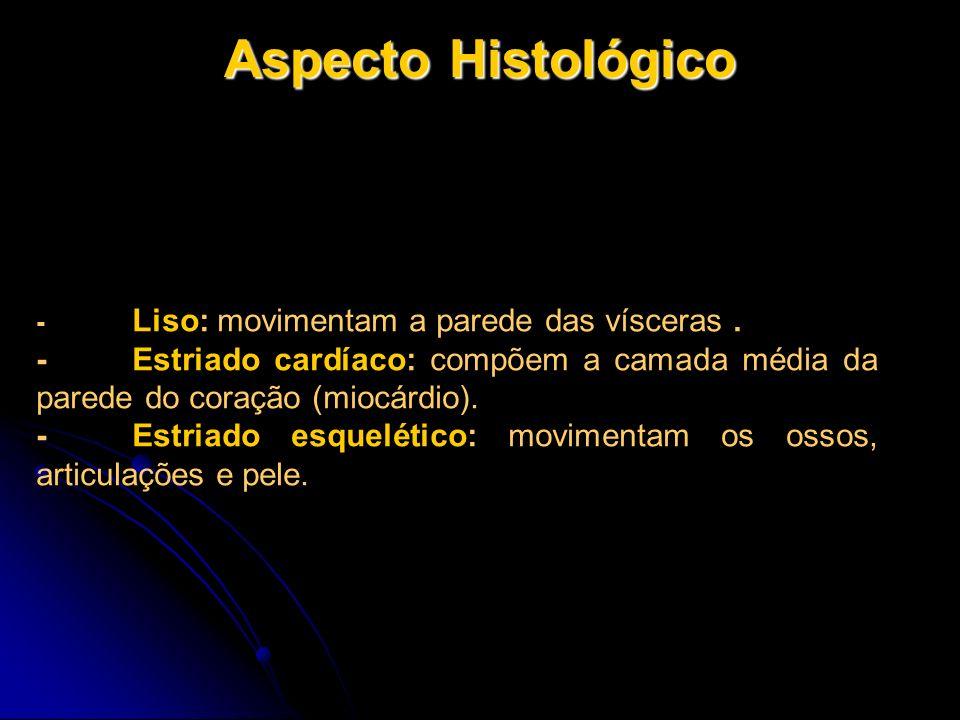 Aspecto Histológico - Liso: movimentam a parede das vísceras. -Estriado cardíaco: compõem a camada média da parede do coração (miocárdio). -Estriado e