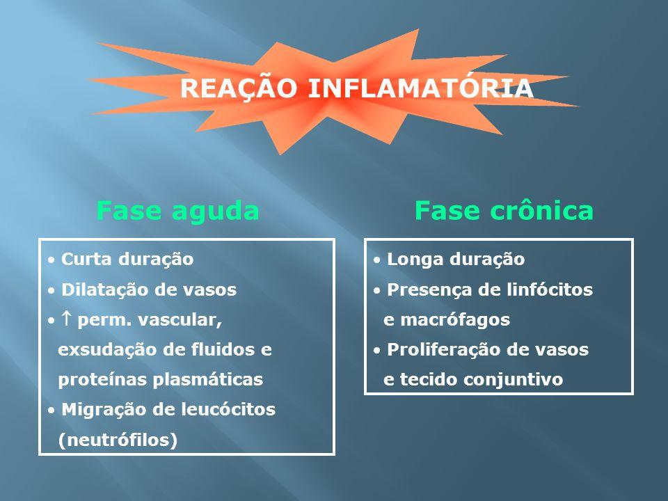 REAÇÃO INFLAMATÓRIA Fase agudaFase crônica Curta duração Dilatação de vasos perm. vascular, exsudação de fluidos e proteínas plasmáticas Migração de l