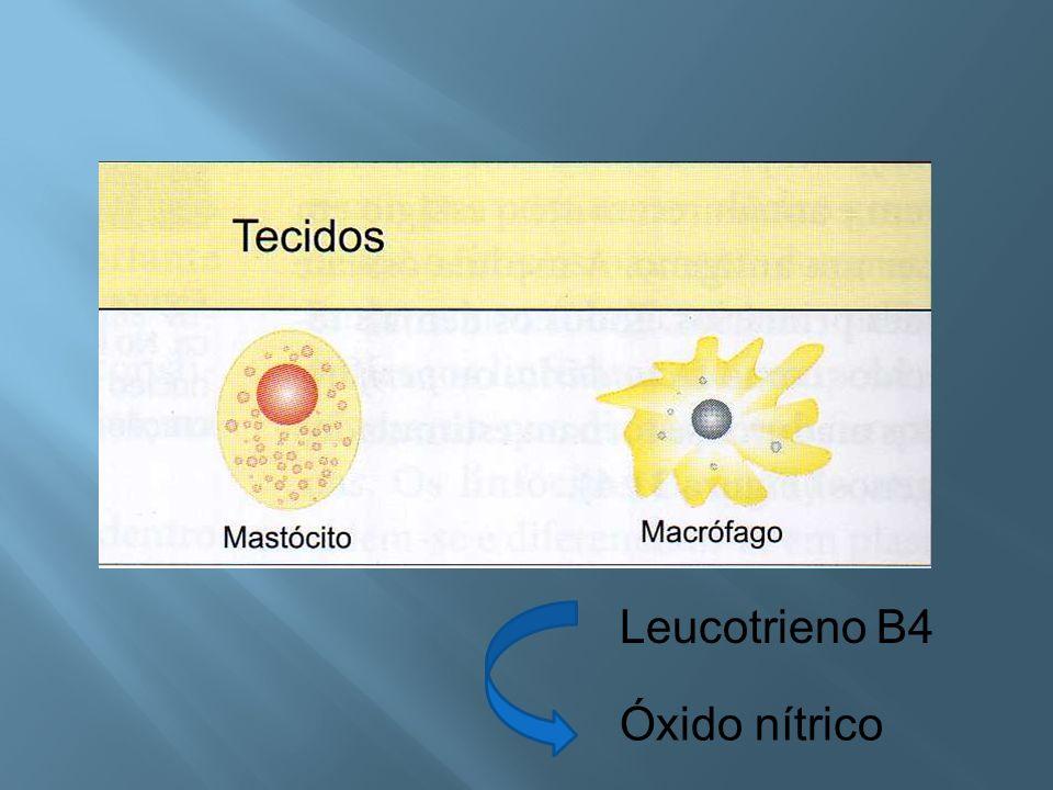 Leucotrieno B4 Óxido nítrico