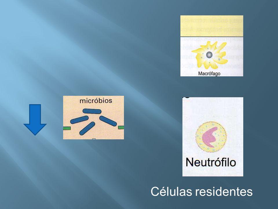 Células residentes