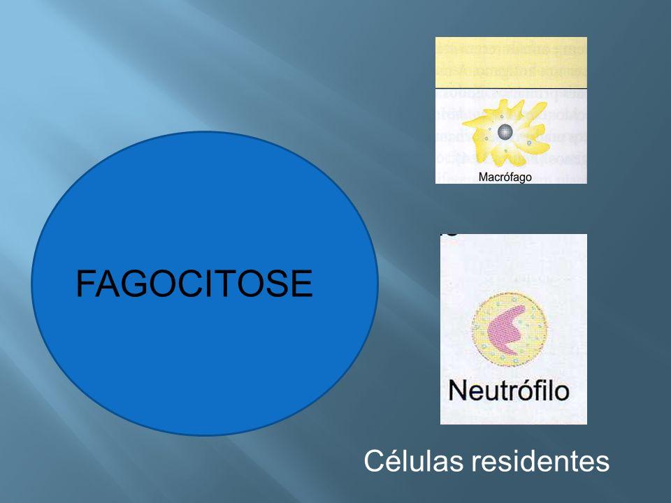 FAGOCITOSE Células residentes