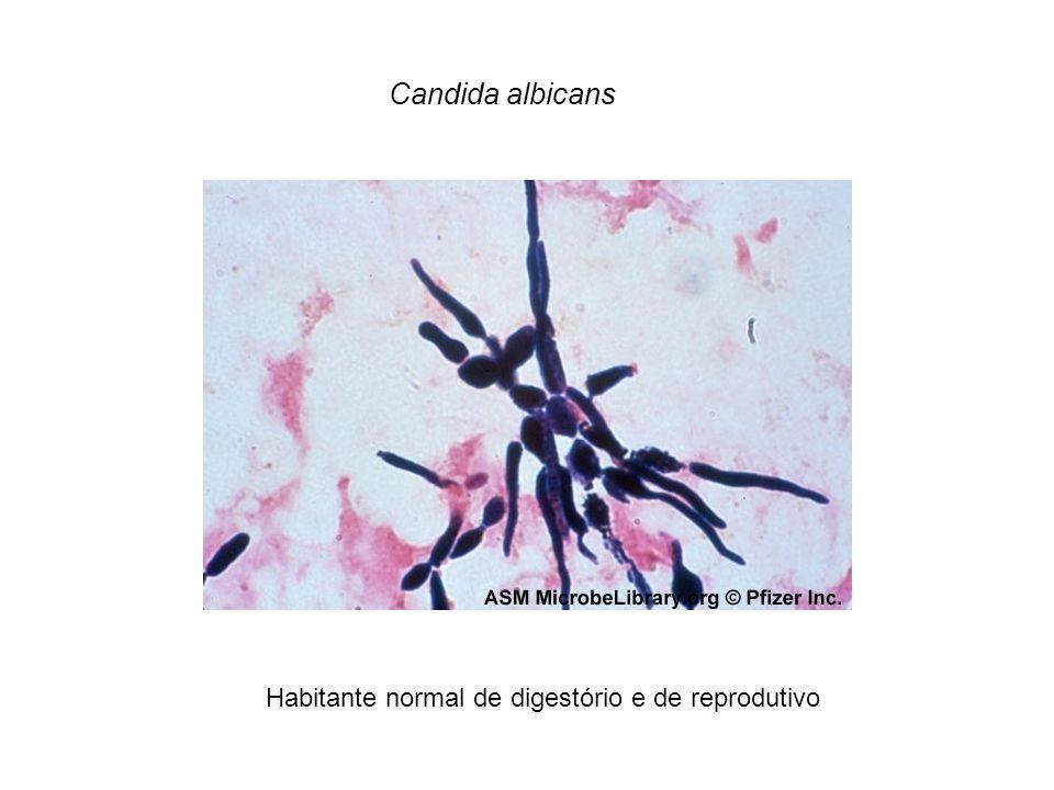 Candida albicans Habitante normal de digestório e de reprodutivo