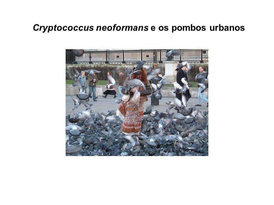 Cryptococcus neoformans e os pombos urbanos