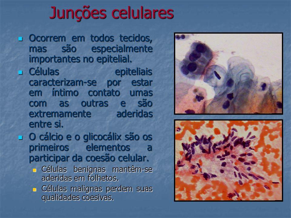 Junções celulares Ocorrem em todos tecidos, mas são especialmente importantes no epitelial. Ocorrem em todos tecidos, mas são especialmente importante