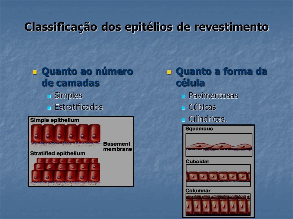 Classificação dos epitélios de revestimento Quanto ao número de camadas Quanto ao número de camadas Simples Simples Estratificados Estratificados Quan