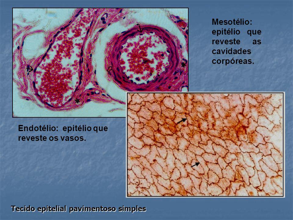 Endotélio: epitélio que reveste os vasos. Mesotélio: epitélio que reveste as cavidades corpóreas. Tecido epitelial pavimentoso simples