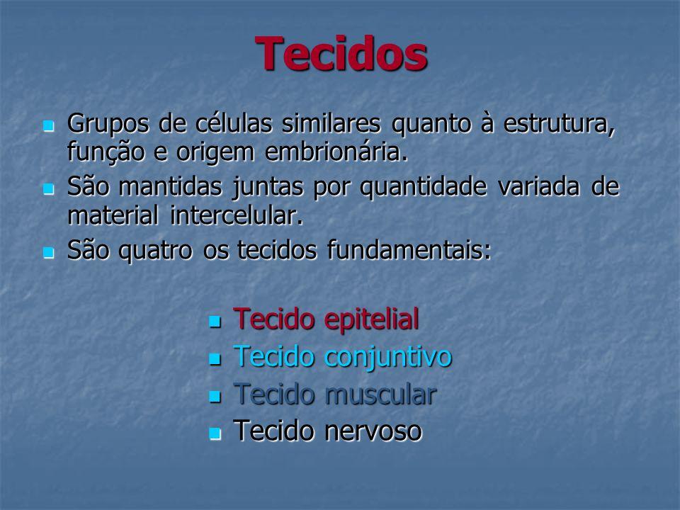 Classificação quanto ao número de células Unicelulares: caliciforme (intestino grosso, delgado e traquéia).