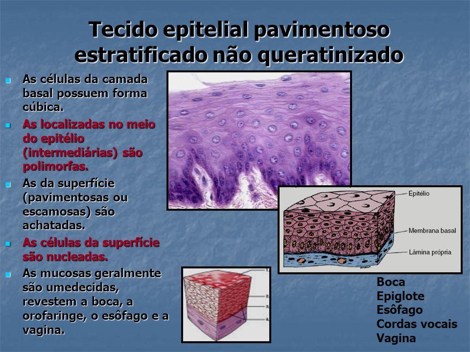 Tecido epitelial pavimentoso estratificado não queratinizado As células da camada basal possuem forma cúbica. As células da camada basal possuem forma
