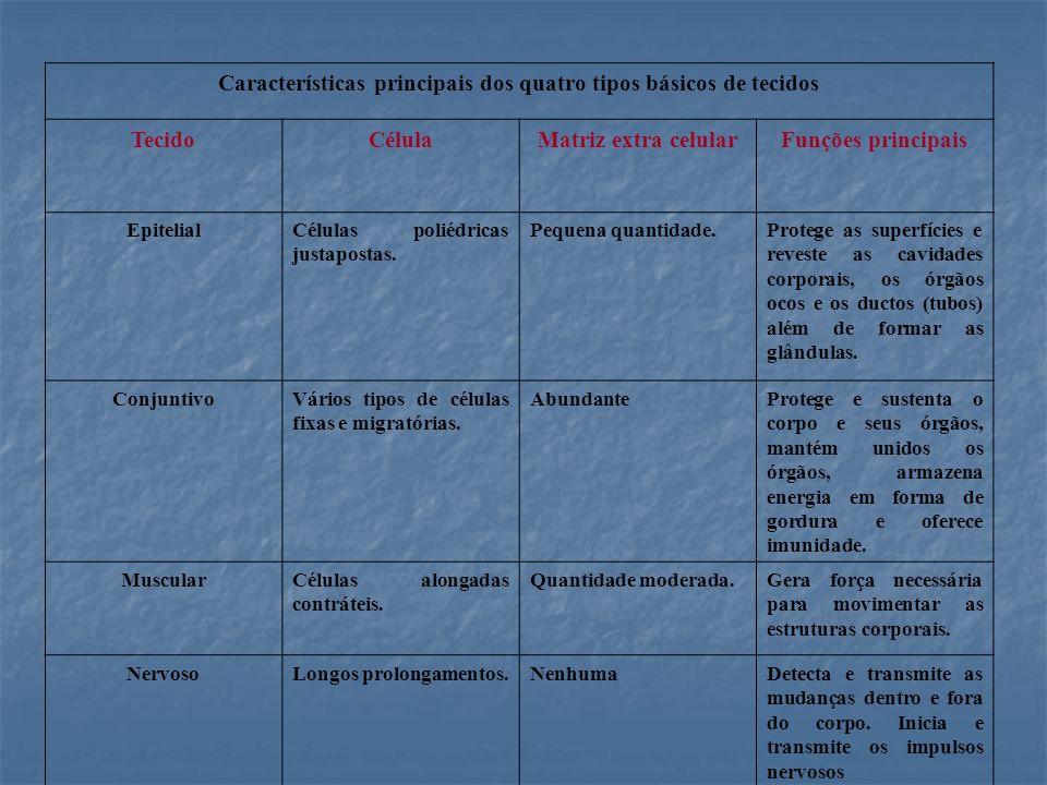 Classificação quanto a presença de ductos excretores Glândulas endócrinas Glândulas endócrinas Cordonais Cordonais Foliculares ou vesiculares Foliculares ou vesiculares Glândulas exócrinas Glândulas exócrinas