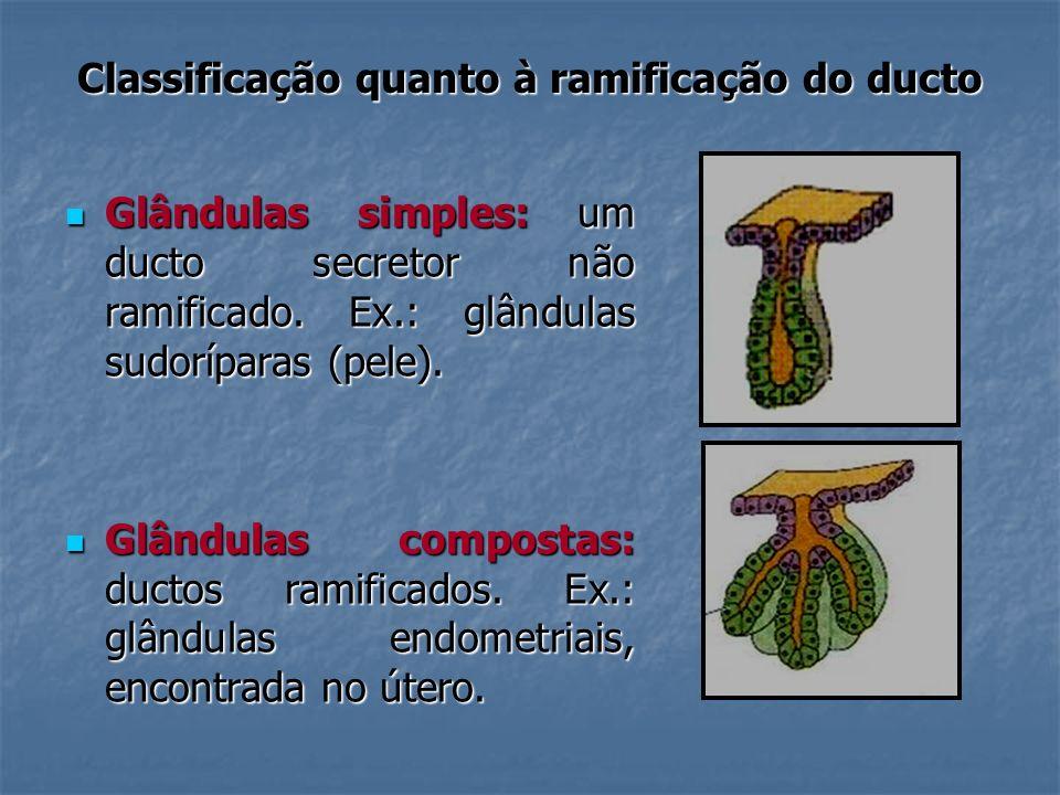 Classificação quanto à ramificação do ducto Glândulas simples: um ducto secretor não ramificado. Ex.: glândulas sudoríparas (pele). Glândulas simples: