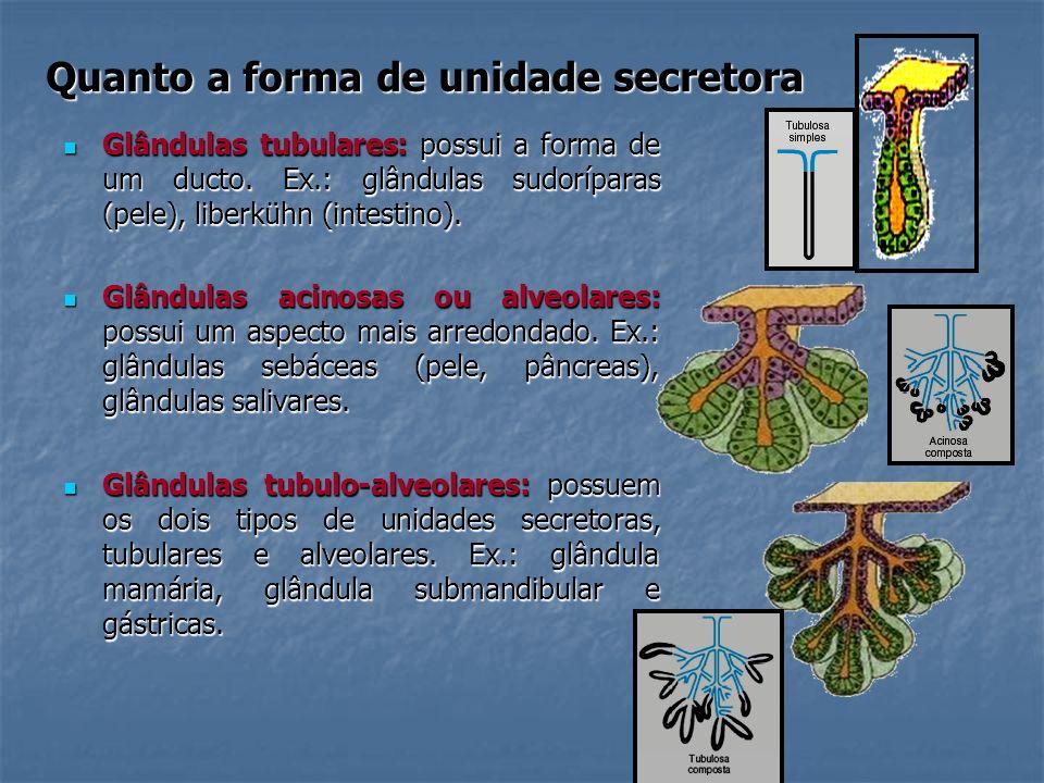 Quanto a forma de unidade secretora Glândulas tubulares: possui a forma de um ducto. Ex.: glândulas sudoríparas (pele), liberkühn (intestino). Glândul