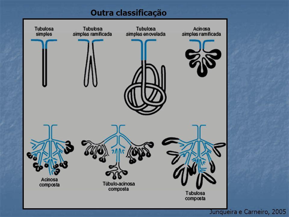 Junqueira e Carneiro, 2005 Outra classificação
