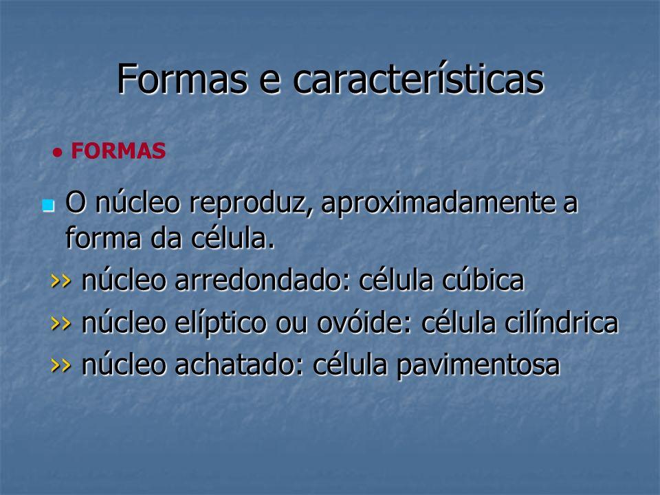 Formas e características O núcleo reproduz, aproximadamente a forma da célula. O núcleo reproduz, aproximadamente a forma da célula. núcleo arredondad