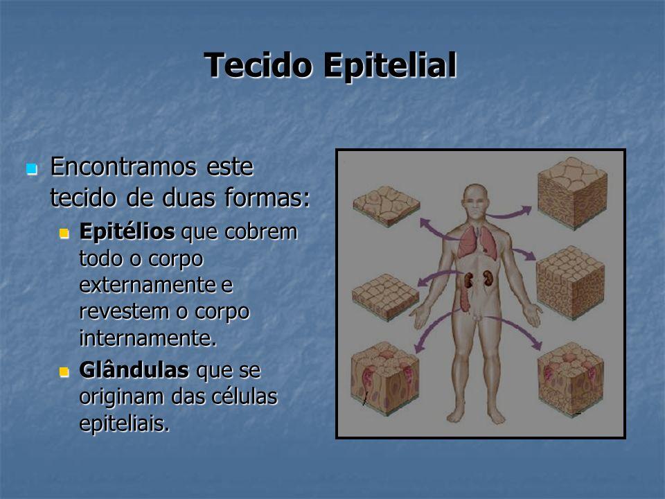 Tecido Epitelial Encontramos este tecido de duas formas: Encontramos este tecido de duas formas: Epitélios que cobrem todo o corpo externamente e reve