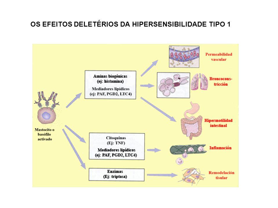 OS EFEITOS DELETÉRIOS DA HIPERSENSIBILIDADE TIPO 1