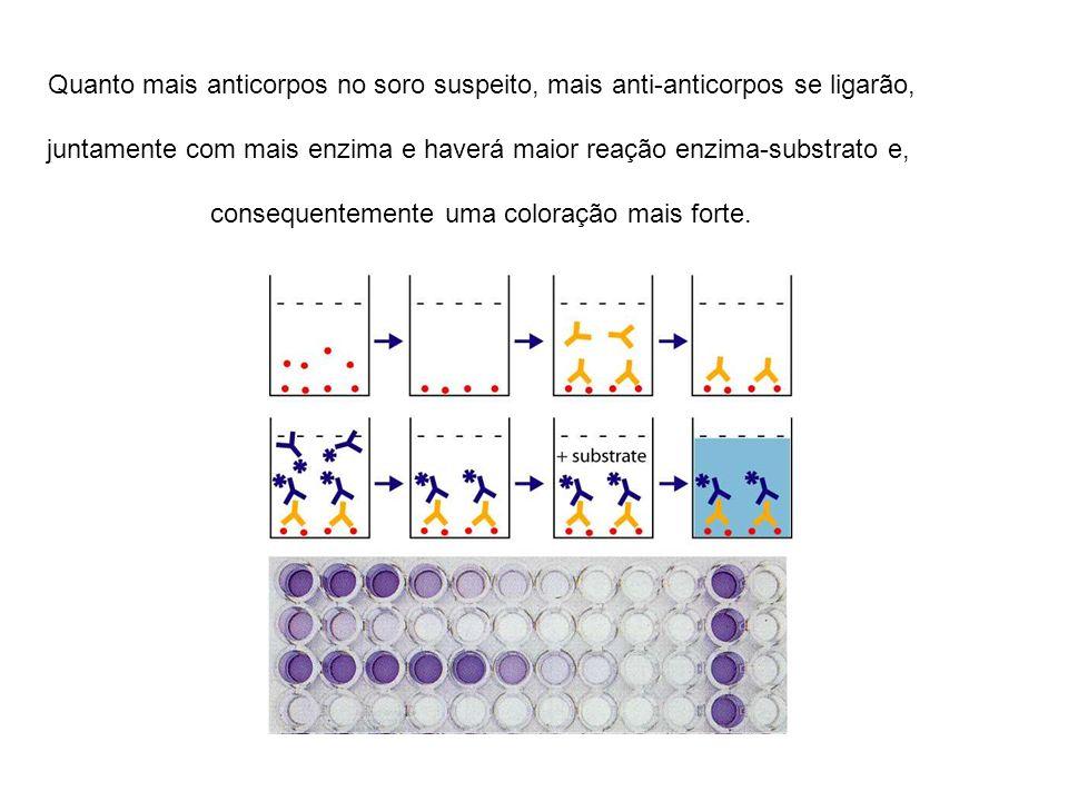 Quanto mais anticorpos no soro suspeito, mais anti-anticorpos se ligarão, juntamente com mais enzima e haverá maior reação enzima-substrato e, consequ