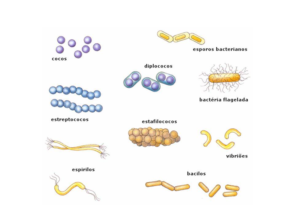 A MICROBIOLOGIA NO COTIDIANO CIENTÍFICO A AIDS é causada por um vírus, um RNA-vírus.
