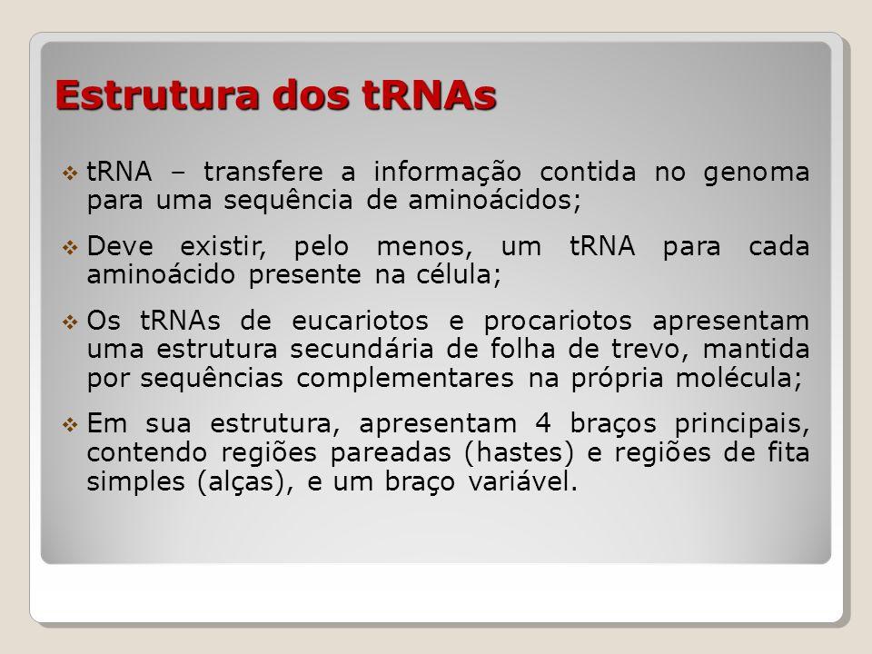 Estrutura dos tRNAs Braço aceptor Braço aceptor : região conservada – CCA.